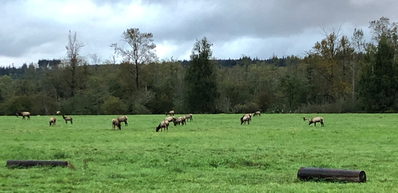 elk crossing pullout parking north side of 202